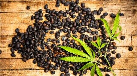 coffee beans, indianexpress.com, coffee-induced inflammation, coffee bean extracts, coffee bean by products, environment, sustainable living,