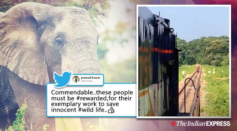 Watch: Drivers stop passenger train to let elephant cross tracks in Bengal, earn praise online