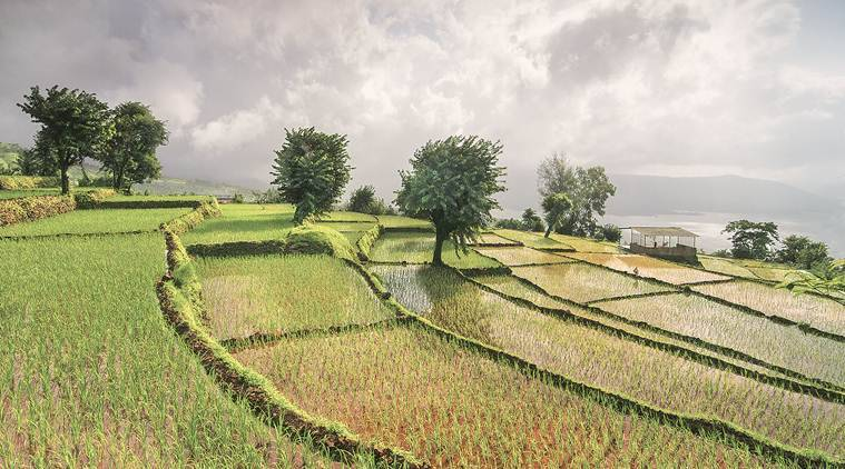 Satellite imagery, artificial intelligence to improve farm yields in Maharashtra