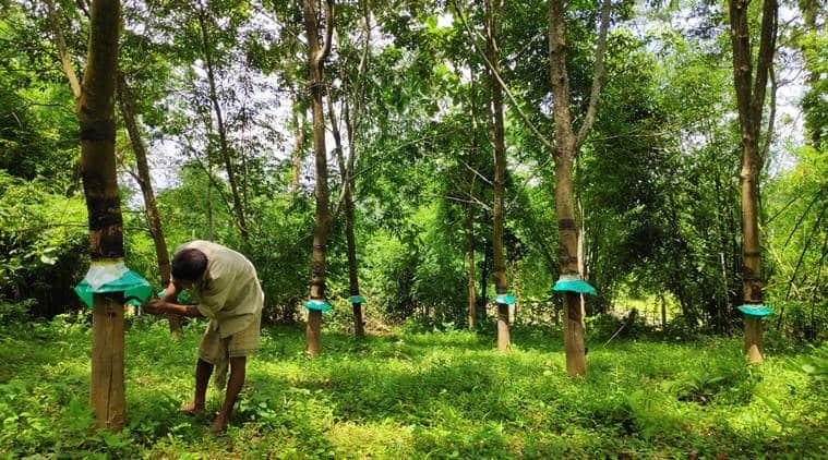 Rubber Rose, the Kerala nun who planted seeds of change in Meghalaya's Garo Hills