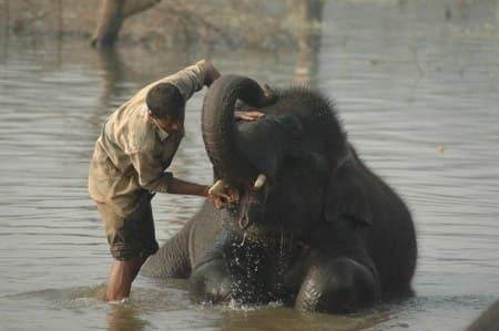 Sakrebailukarnataka-elephant