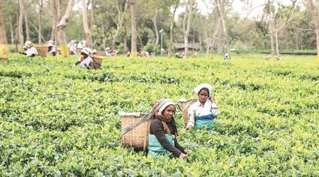 Assam, Tea garden workers