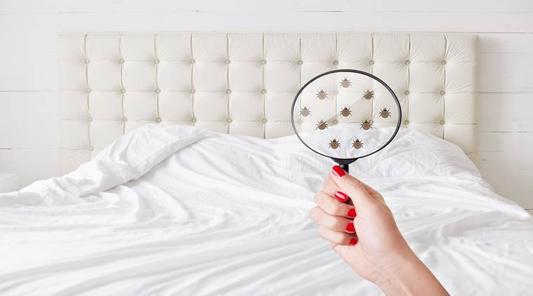 bed bugs, bed bug facts, bed bug myths, indian express, indian express news
