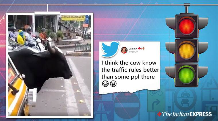 Preity Zinta, Preity Zinta Twitter, Cow obeys traffic rules, viral video, Trending, Indian express news