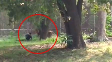 man enters lion enclosure in delhi zoo, National Zoological Park, man rescued from lion enclosure, delhi city news