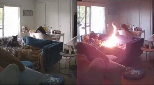 dog sets couch on fire, pet dog sets sofa fire, dog chew lighter fire, indian express, funny videos,
