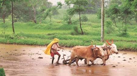 monsoon withdrawal, maharashtra rain, maharashtra rain latest news, kharif crops, indian express