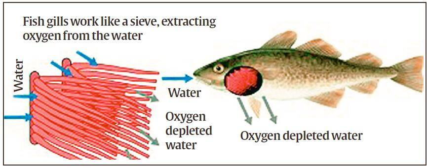 Explained: What fish do amid climate change