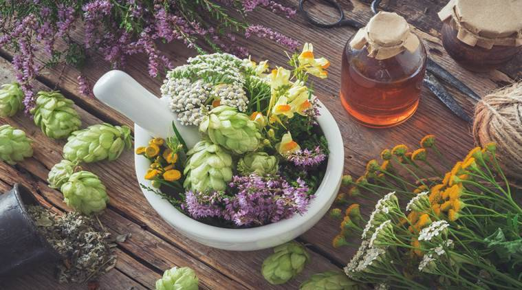 Want to fight viruses this season? Let these herbs help you | Lifestyle  News,The Indian Express
