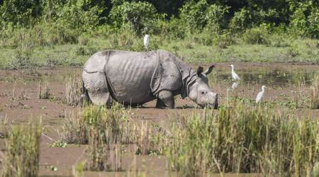 Boating, cycling: Kaziranga authorities introduce new ways to explore the park