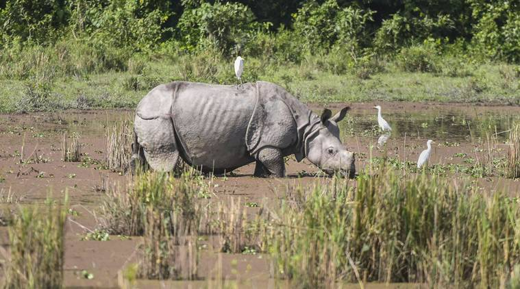 No selfies with animals: Why lockdown is forcing Assam Forest Dept to warn about going wild in human habitats