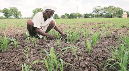 Maharashtra: Two-member Central team visits Nashik to inspect crop loss