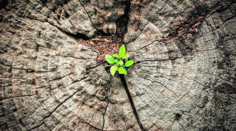 plant saplings, Greening Chandigarh Action Plan, chandigarh air pollution, chandigarh news, Indian express news