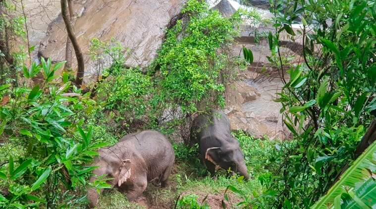 Six wild elephants die after falling over waterfall in Thailand