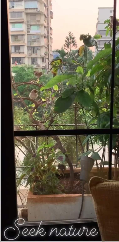 dia mirza, fridaysforfuture, climate strike, climate change, dia mirza indianexpress, indianexpress.com, sustainable living, dia mirza activist, indianexpress.com, cuckoo about nature, biodiversity dia mirza, development measures, NGT, greta thunberg, children's day, dia mirza delhi, thermal power plants, air pollution delhi, delhi smog, toxic air,