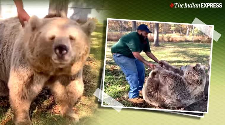 Bear reunited with caretaker, orphaned Bear reunited with caretaker, Animal videos, Trending, Indian express news