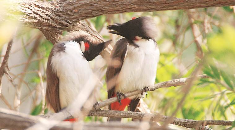 animals, birds, cleanliness, environment, eye 2019, sunday eye, indian express, indian express news