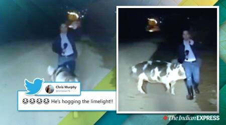 tv bloopers, pig chases journalist, greek reported chased by pig, pig bite tv reporter live, viral videos, funny tv bloopers, viral news, indian express
