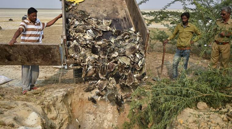 Mystery illness at Rajasthan lake kills 8,000 birds, many migratory