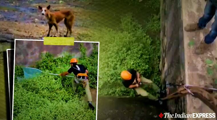 animal rescue, dog rescued, dog rescues viral video, dog rescued 40 feet 8 days viral video