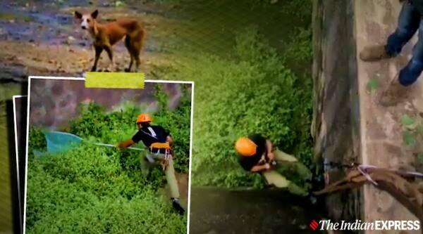 animal rescue, dog rescued, dog rescues viral video, dog rescued 40 feet 8 days viral video, trending, indian express, indian express news