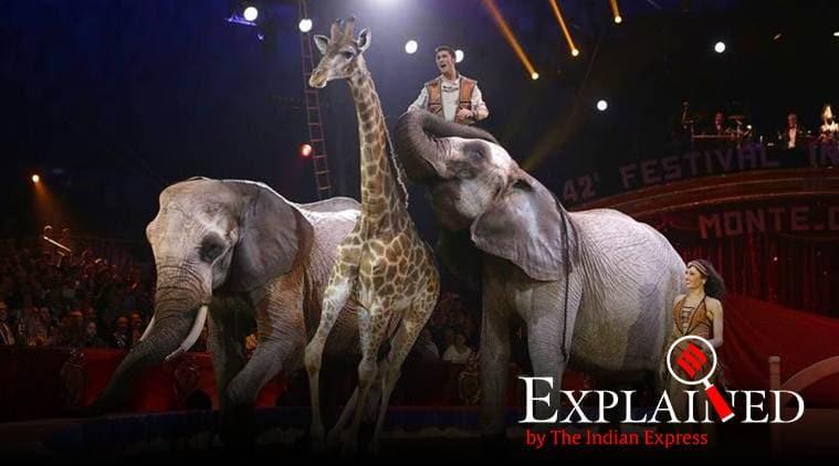 paris circus, Paris band animals in circus, wild animals in circus, Paris circus animlas, animal rights, indian express
