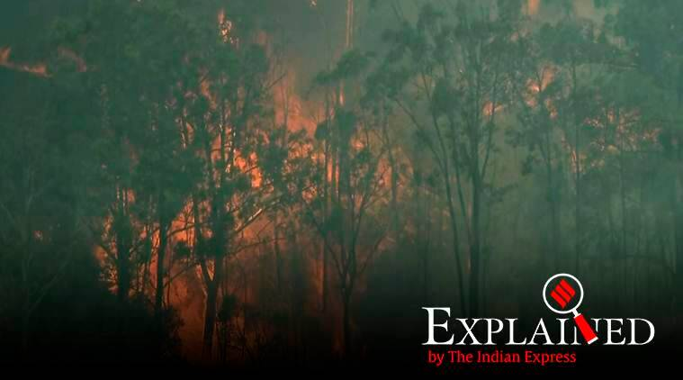 Explained: Why Australia is looking at a climate change angle to its bush fires