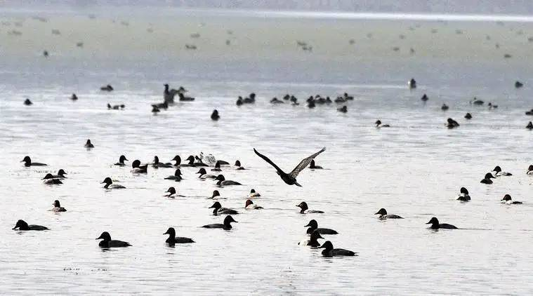 Rajasthan: Thousands of migratory birds found dead in Sambhar Lake