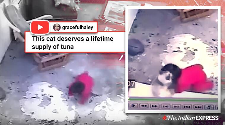 Cat save toddler from falling down a flight of stairs, Cat praised after it saves toddler from falling down flight of stairs, Cat videos, Trending, Indian express news