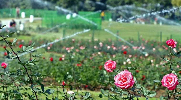 Chandigarh: Three-day Rose Festival to begin on February 28