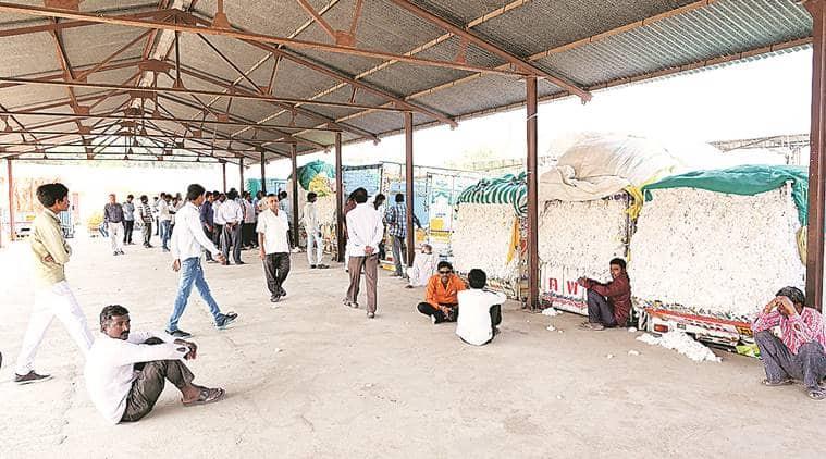 vidarbha, vidarbha farmers, vidarbha rains, vidarbha cotton farmers, maharashtra farmers, farmers woes, india news