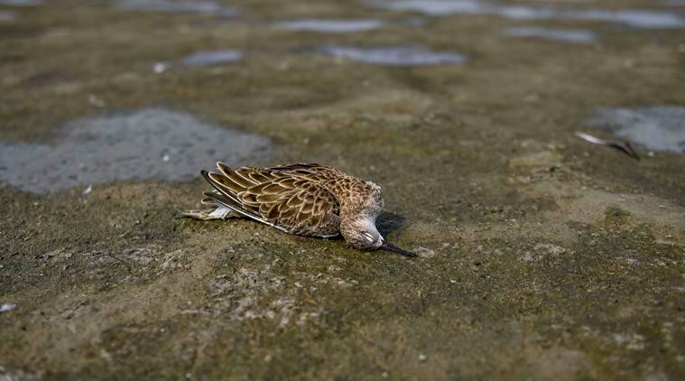Over 10,000 birds dead in Rajasthan