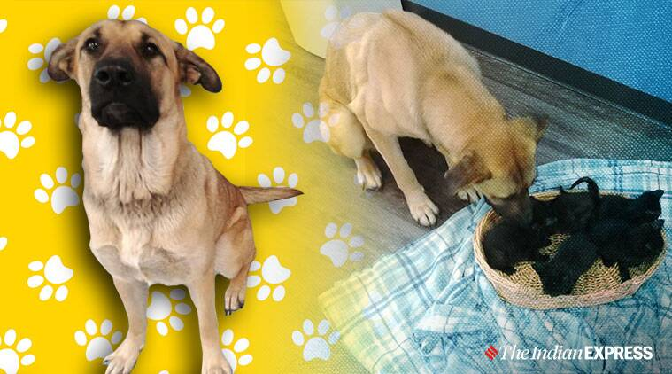 Stray dog in Canada saves five kittens from cold by wrapping herself around them