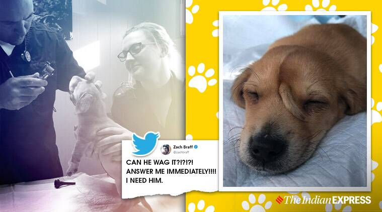 puppy with extra tail, narwal unicorn puppy, puppy rescued with extra tail, viral news, cute dog videos, indian express