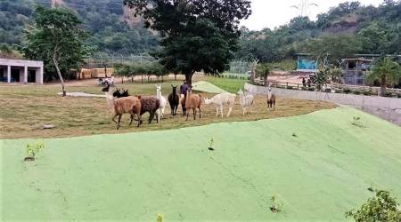 Death of imported animals at Kevadia park: Some mortality expected, says govt