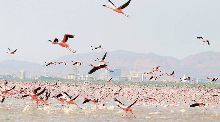 MoEFCC gives approval for study by BNHS to develop portal of 3D profiles of migratory birds