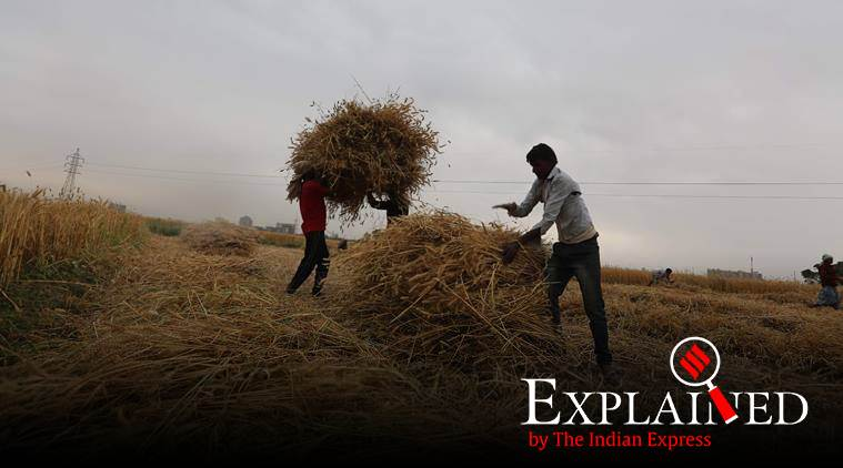 stubble burning, punjab stubble burning, punjab farmers, paddy farmers, Punjab crop burning