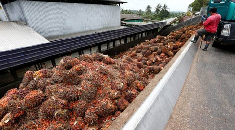 India resumes buying Malaysian palm oil: report