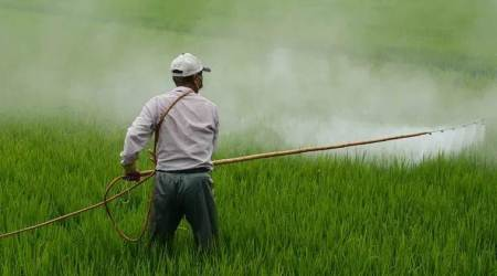 Punjab farmers, Pesticide ban, Chandigarh news, Punjab news, Indian express news