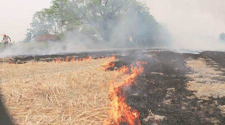 Punjab stubble burning, punjab farmer unions, chandigarh news, punjab news, indian express news