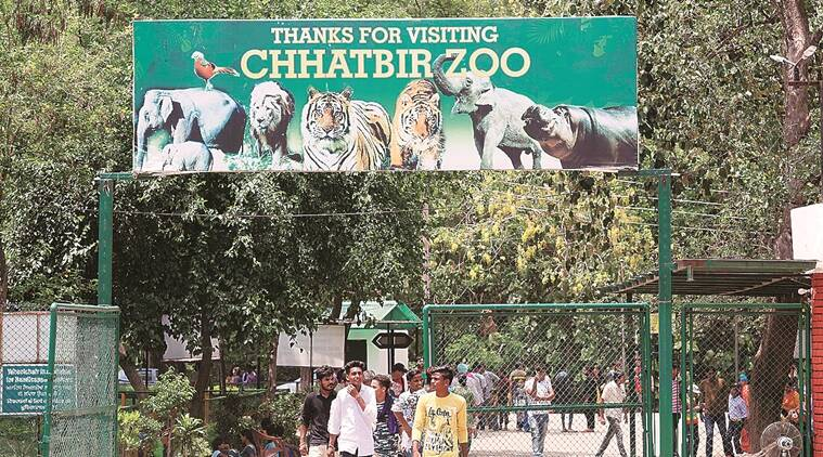 Chhatbir zoo, panchkula news, chandigarh city news, tigers at Chhatbir zoo