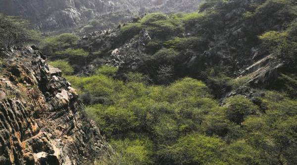 Aravalli, green wall along Aravalli, environment, climate change, ahmedabad news, india news, indian express news