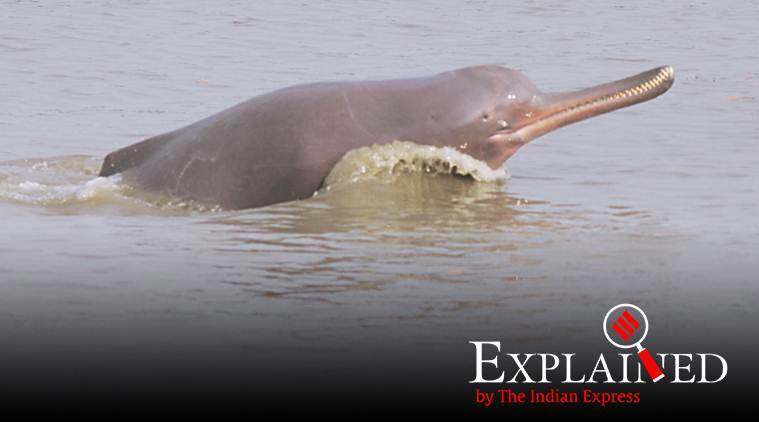 Explained: Why India needs a Project Dolphin