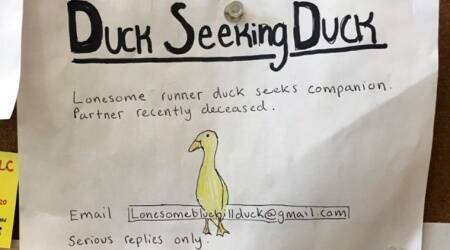 Ducks, singles ad, Dating ad for ducks, Trending, Indian express news