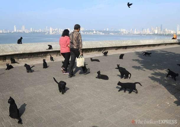 black cats cross path superstition, mumbai beaches, mumbai street installation artists, mumbai news, latest news