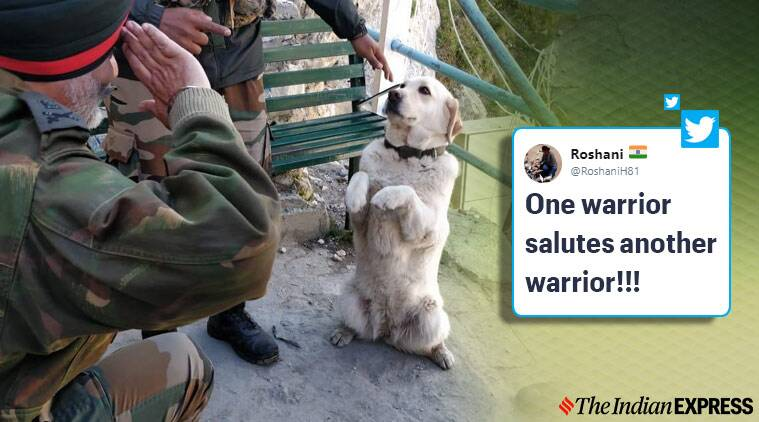 dog salute officer, RVC Day, Army Veterinary Corps, adgpi, dog salute viral pictures
