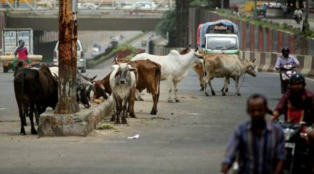 indigenous cows, Union Ministry of Science and Technology, SUTRA PIC, india news, indian express