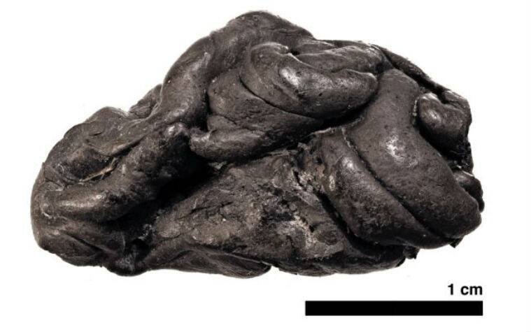 5700 year old woman, 5700 year old chewing gum, old chewing gum, ancient woman diet, university of copenhagen