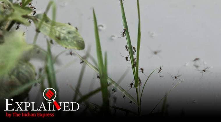 dengue, malaria, chikungunya, water-borne diseases, indian express explained