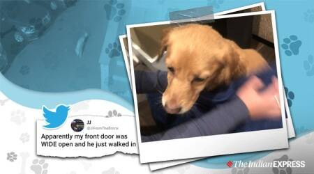 abandoned dog finds forever home, abandoned dog, dog adopts family, dog adopts Philadelphia family, trending, indian express, indian express news